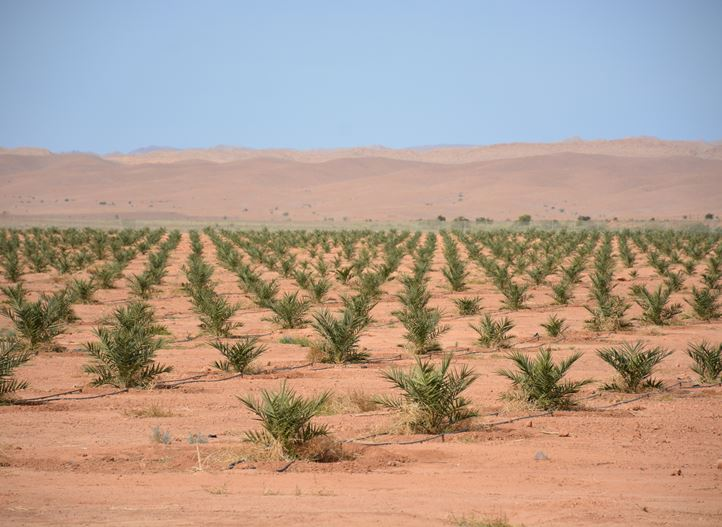 Precision irrigation, irrigation solutions, oil palm